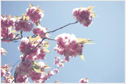 Blossum_3