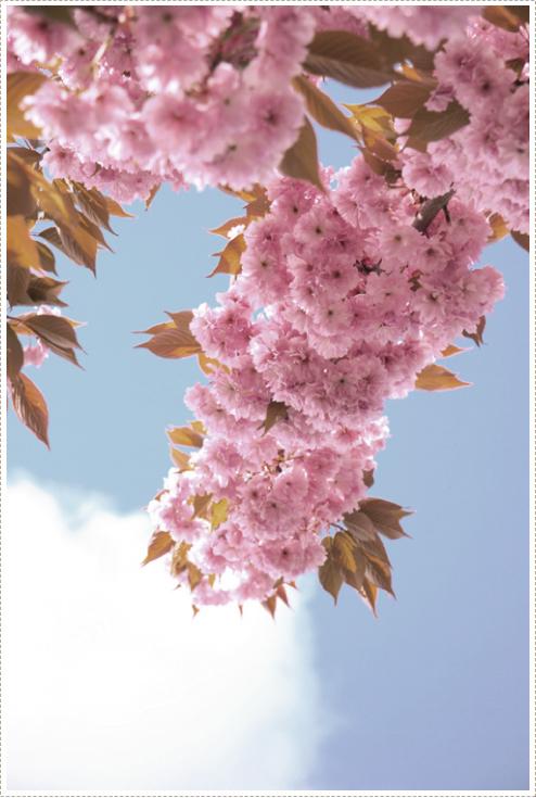 Blossum_2