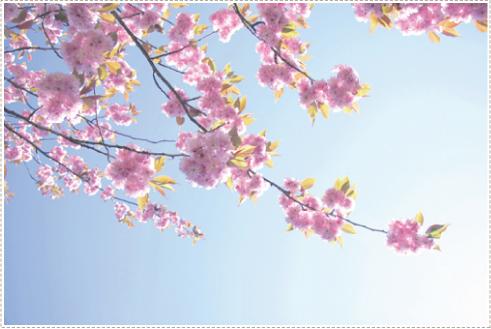 Blossum_4
