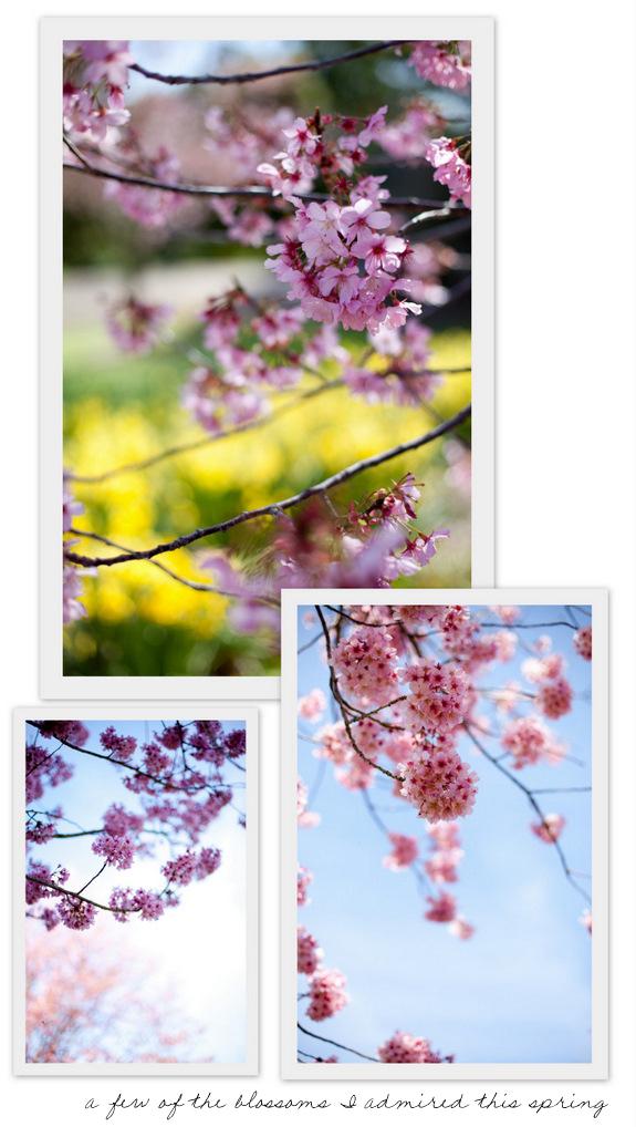 BlossomsA